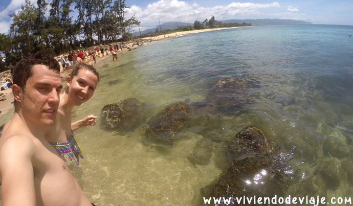tortuga-hawai