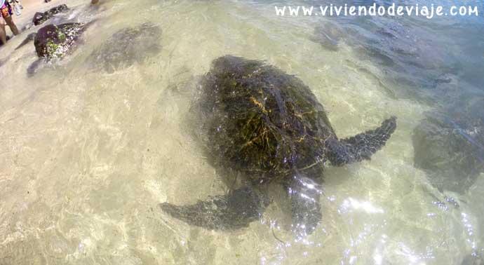 tortugas-Hawai