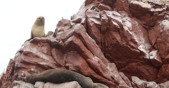 Paracas-islas-ballestas-reserva-nacional-peru