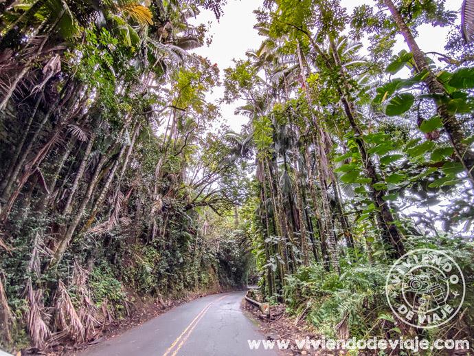 Carretera escénica Old Mamalahoa en Big Island