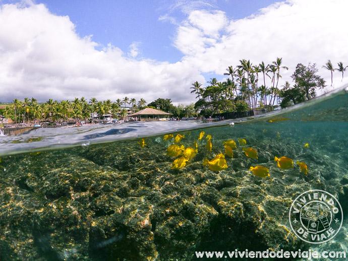Kahalu'u Beach en Big Island
